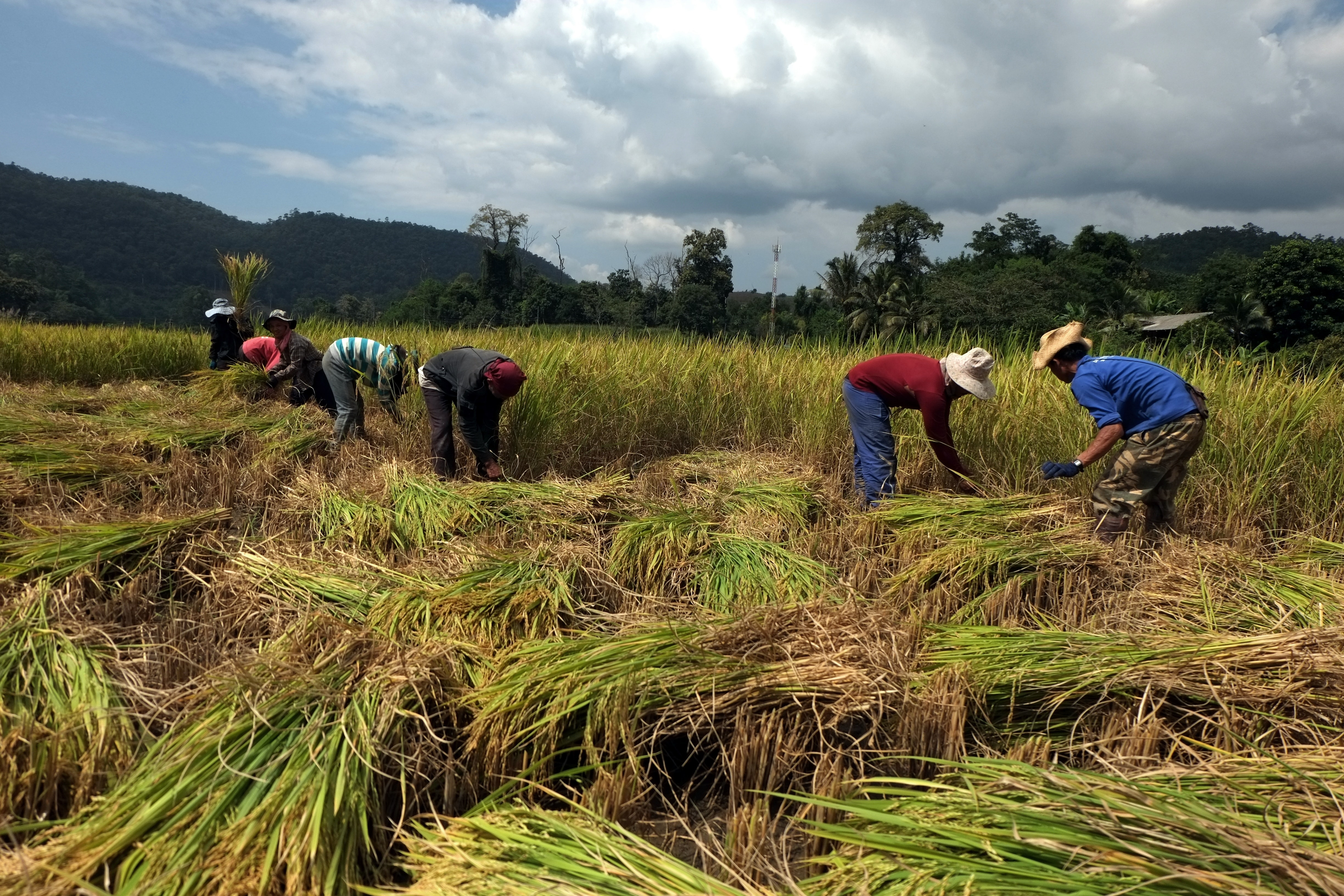 How Companies Can Partner with USAID to Transform the Food System