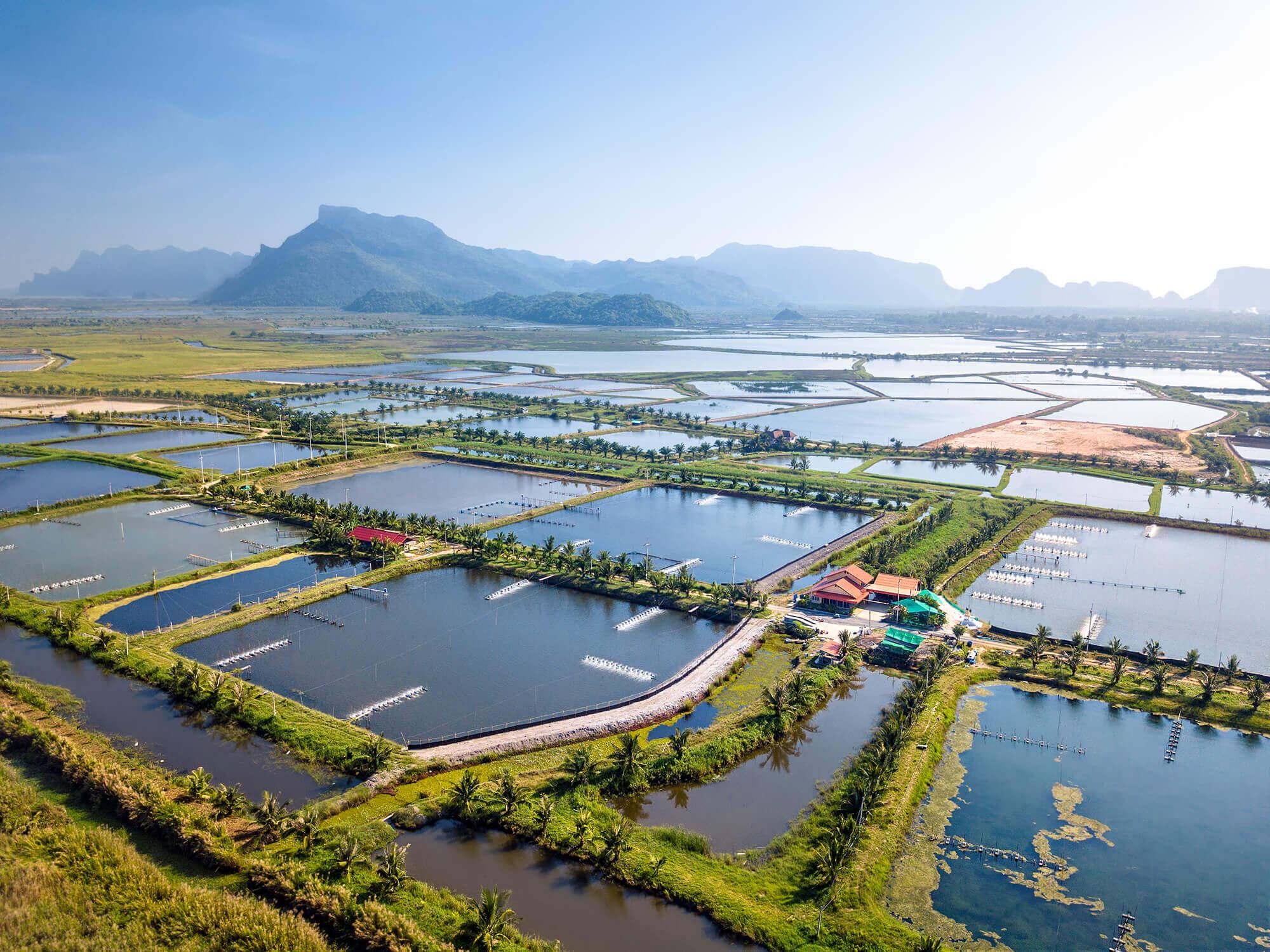 The Evolution of Aquaculture