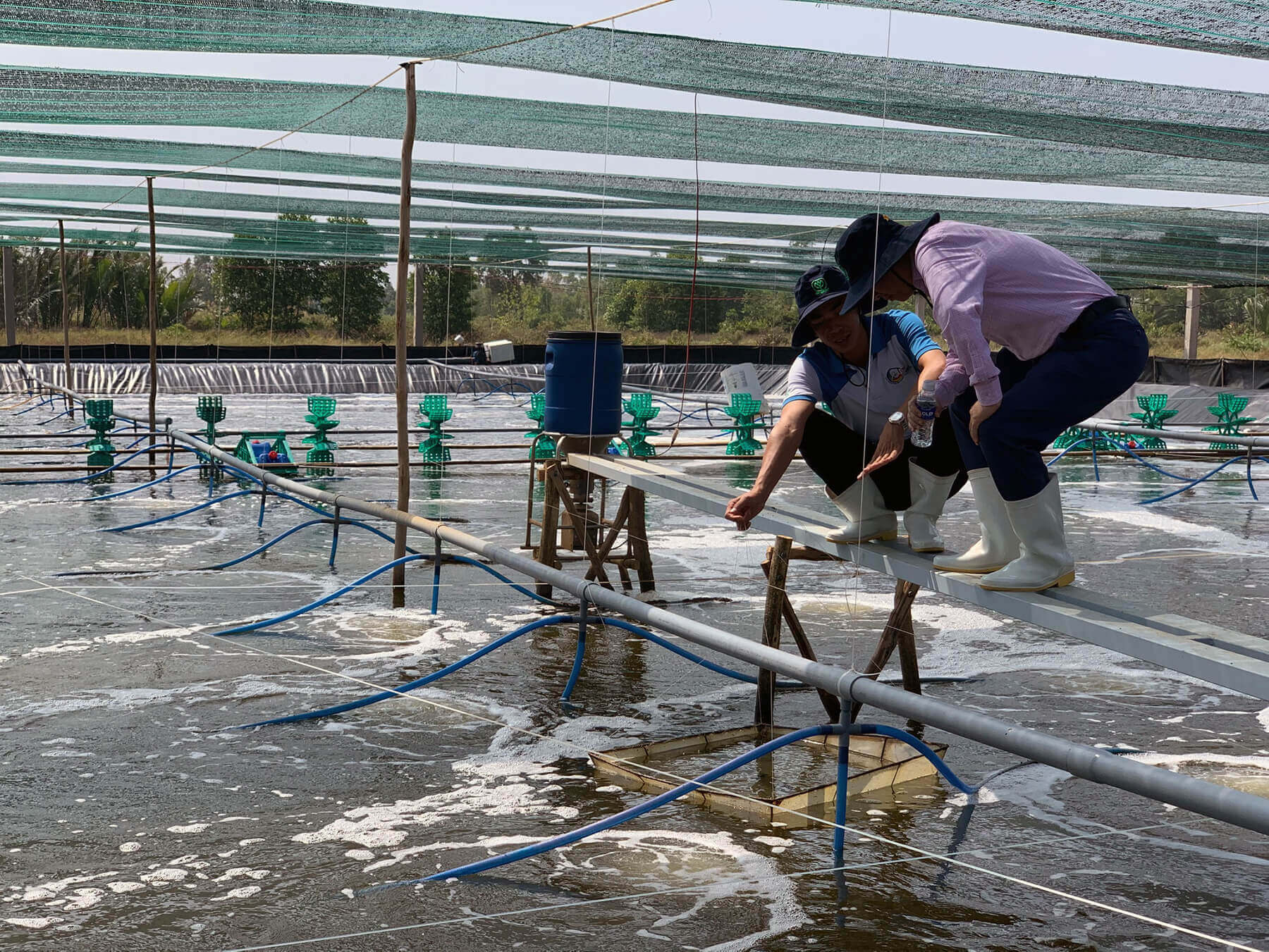 Shrimp-Farm-Vietnam seafood watch project
