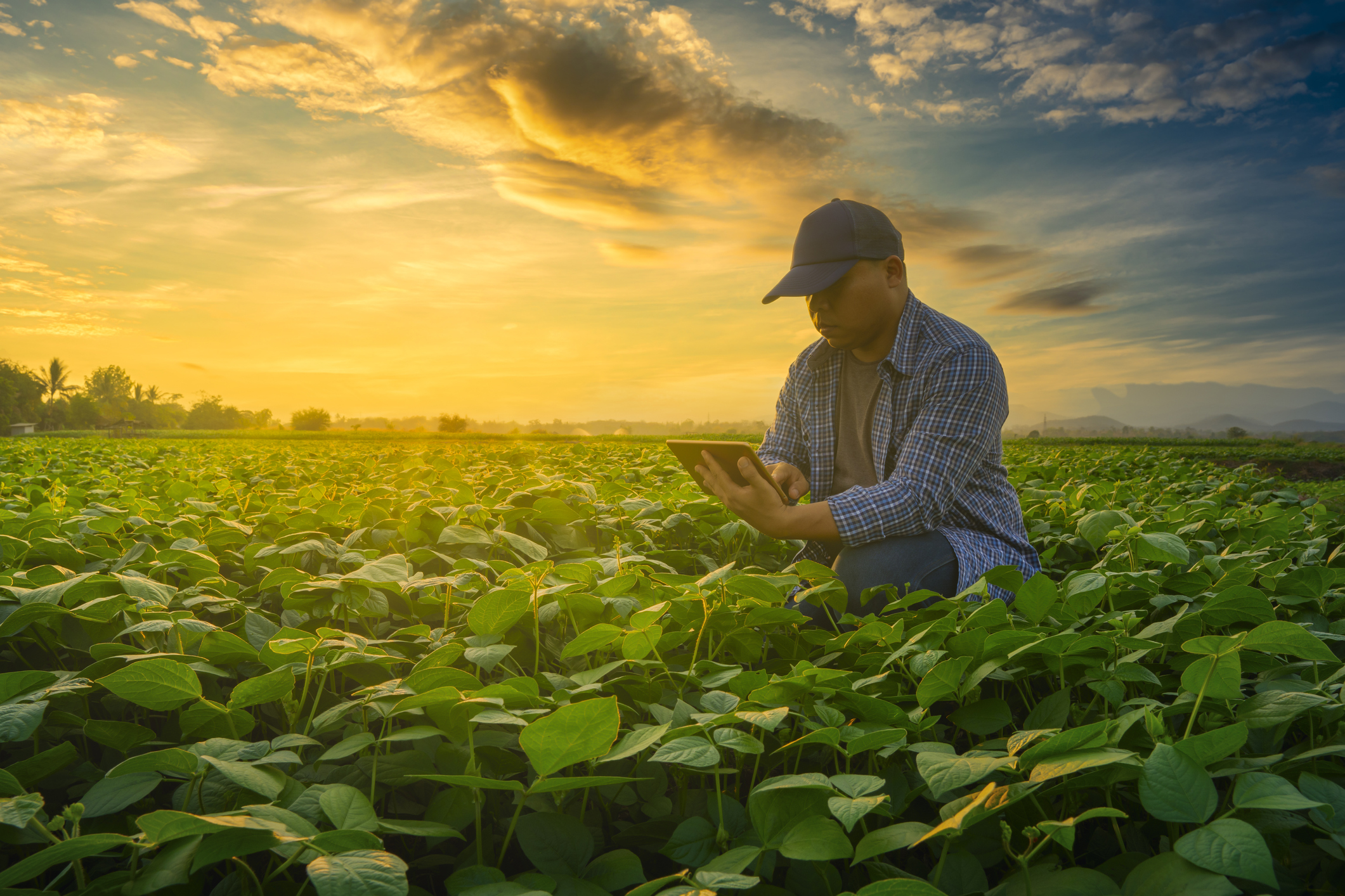How to leverage innovation and collaboration to build a more sustainable food system.