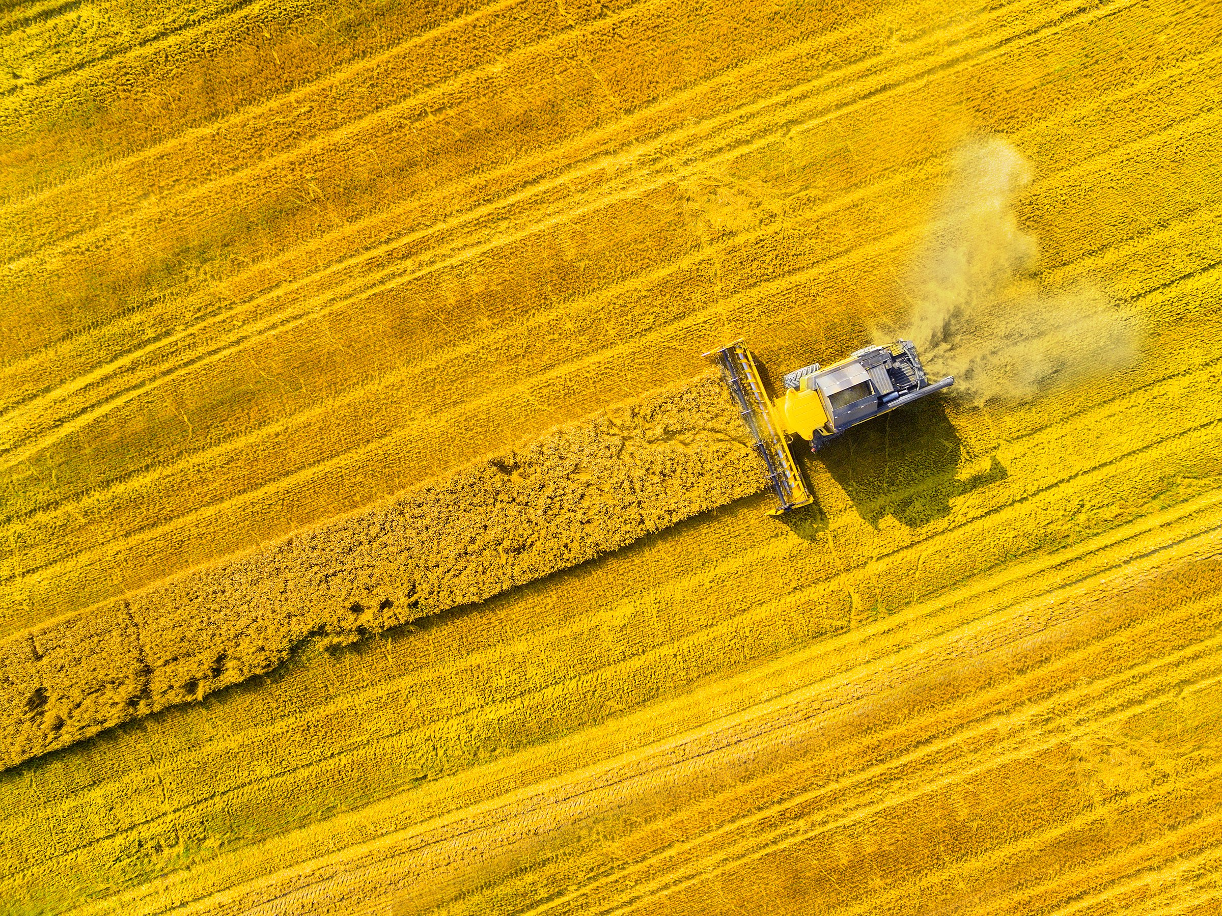 4 Approaches to Food System Transformation for Food and Beverage Companies